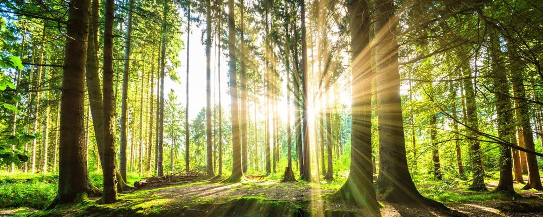 Billige Brennholz aus Polen.